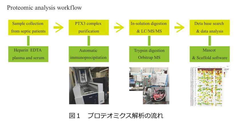 図1 プロテオミクス解析の流れ